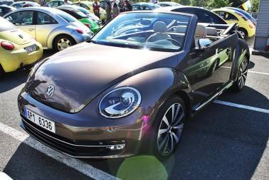Sraz Beetle